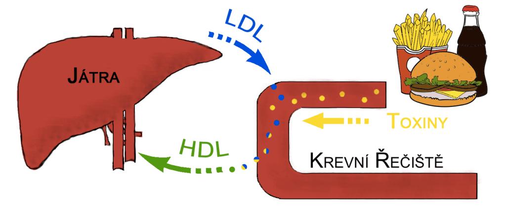 Cholesterol4-1024x436